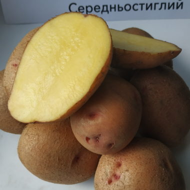 сорт картоплі Ажур
