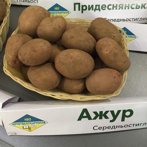 середньоранній сорт картоплі Ажур