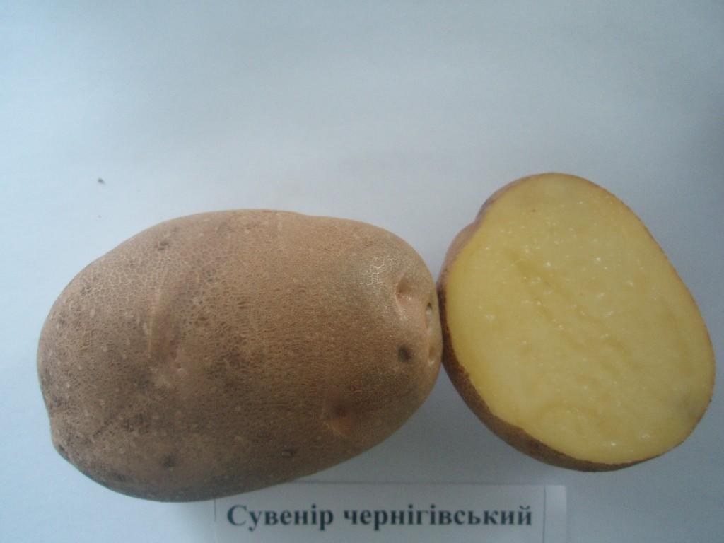 Картопля Сувенір Чернігівський