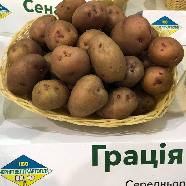 Грація - середньоранній сорт картоплі столового призначення