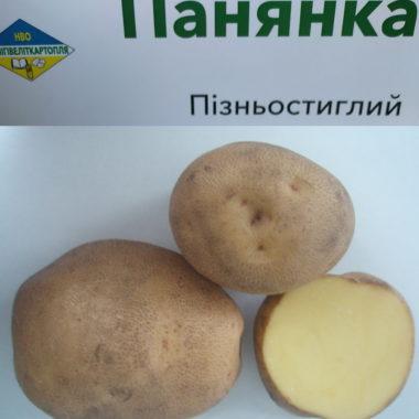 бульби соту картоплі Панянка