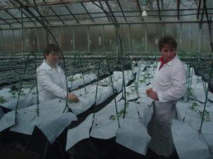 висаджування рослин