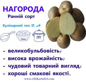 сорт картоплі Нагорода